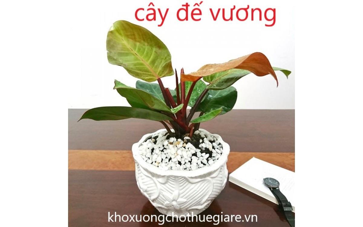 Cây Đế Vương và ý Nghĩa của loài cây này.