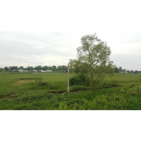 bán đất củ chi- diện tích lớn - giá tốt