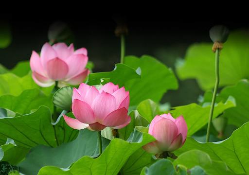 Những nguyên tắc vàng cho sự thành công- Toàn Việt Real.